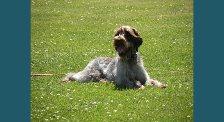 club canin abbeville